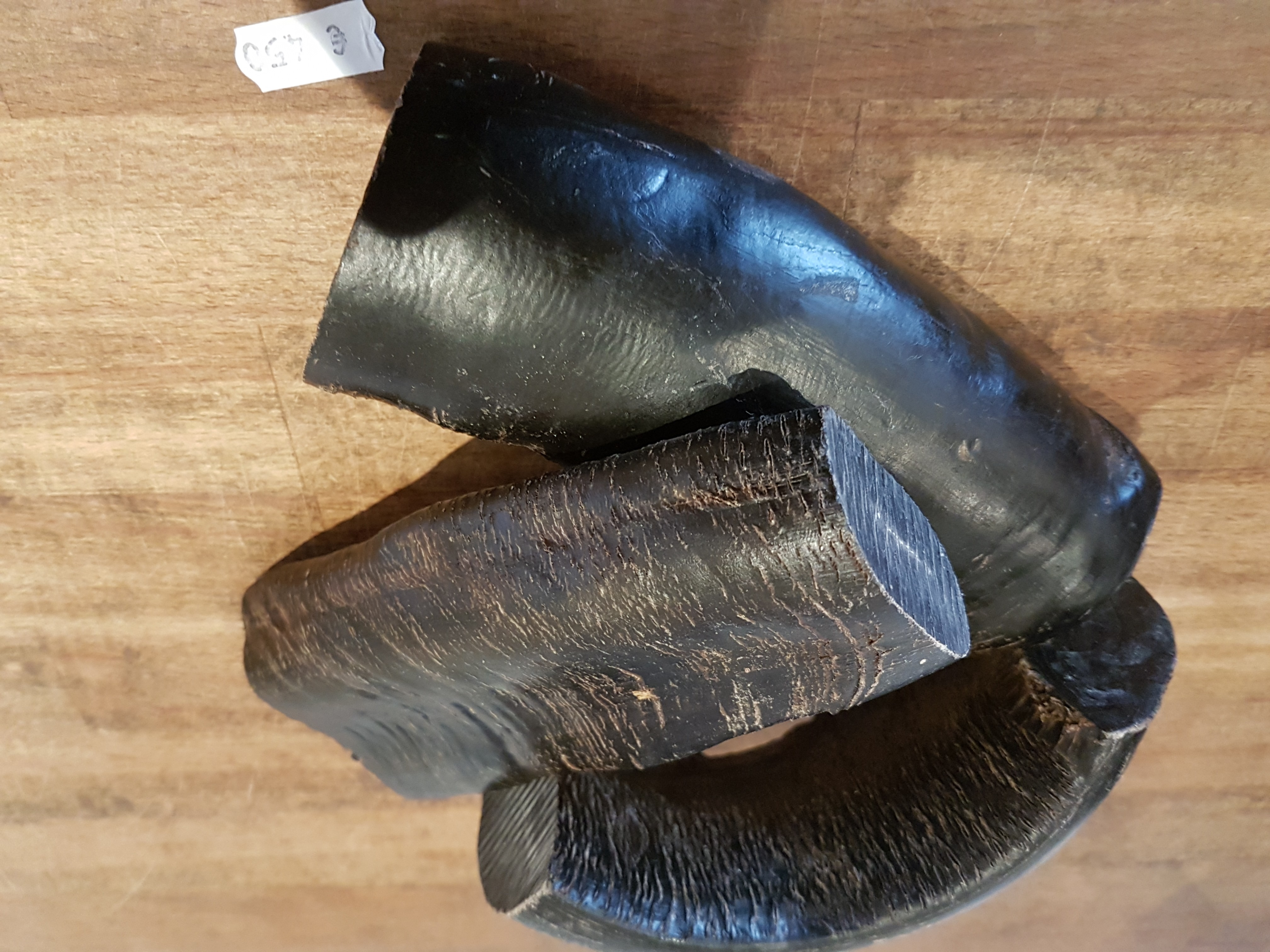 Wasserbüffel-Horn